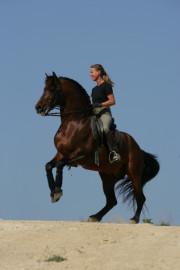 conny niedenthal - urlaub und reiten auf mallorca, Hause und Garten